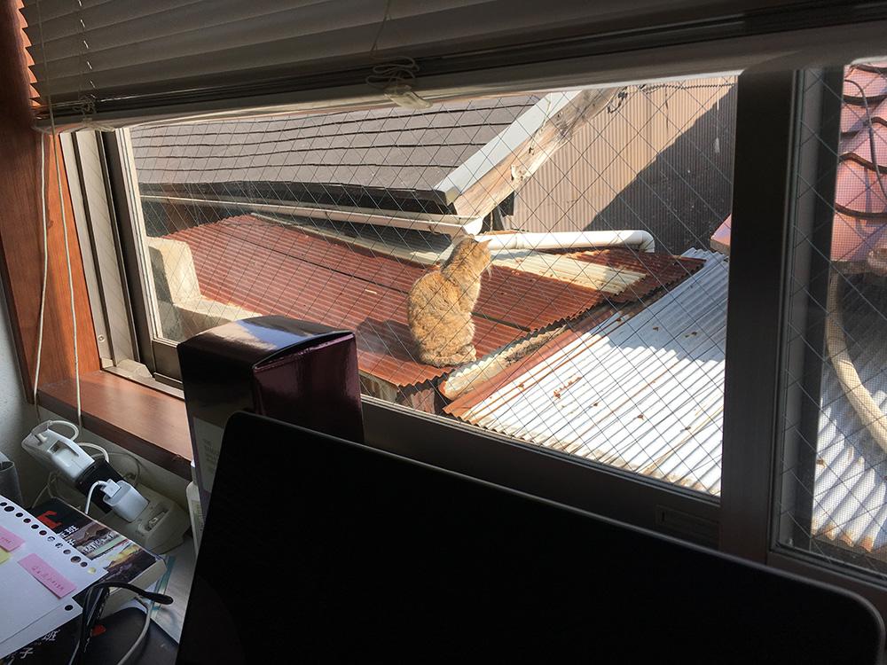 トタン屋根の猫