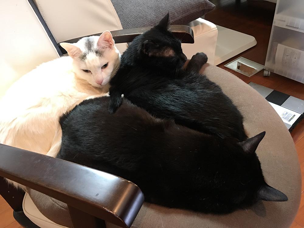 シロクロ猫