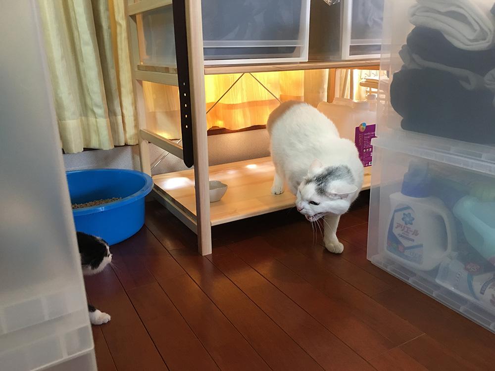 ぺんぺんの家猫修業