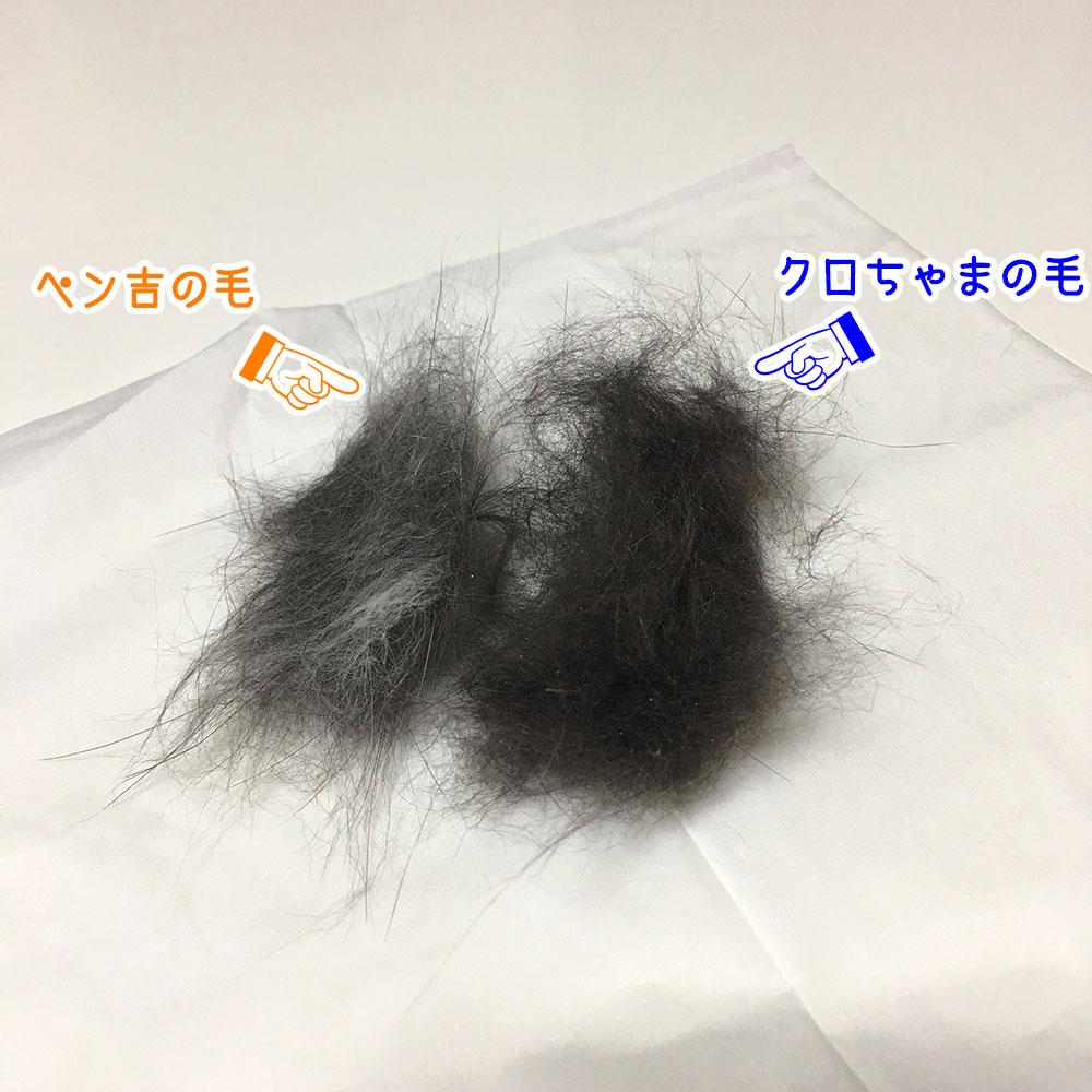 ペンの毛とクロの毛