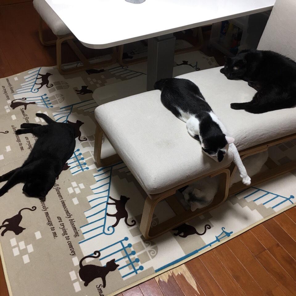 まつむら家の猫