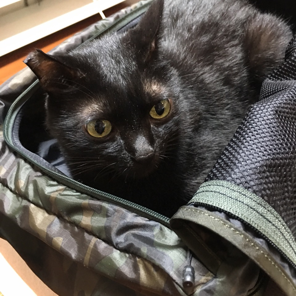 KURO in the bag3