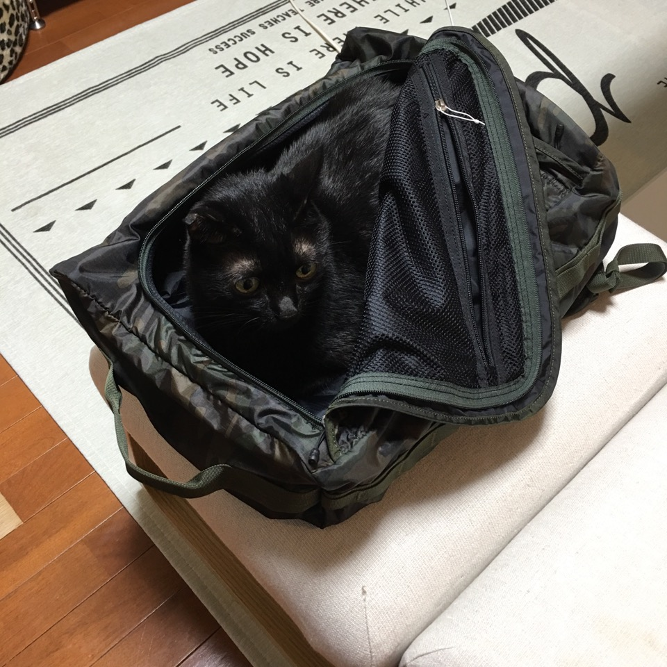 KURO in the bag1