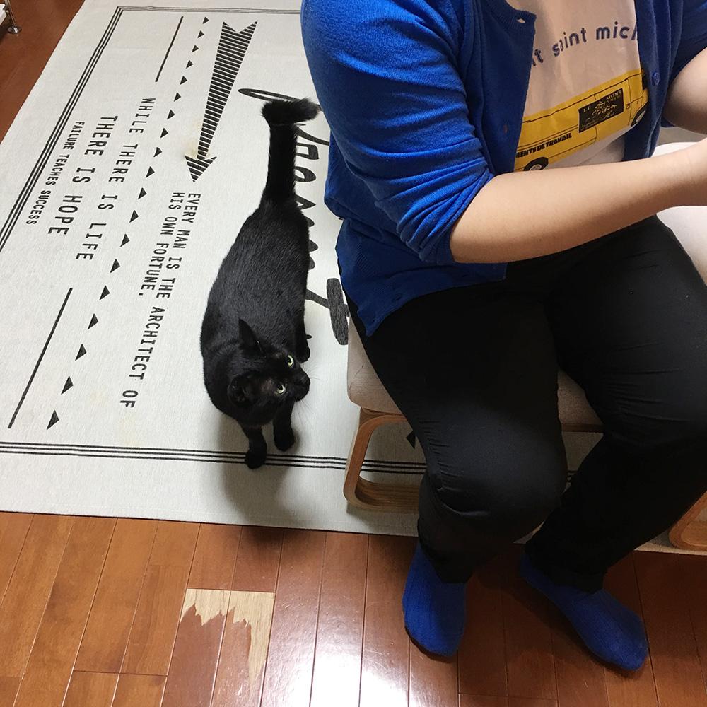 ぷりぷりと猫1